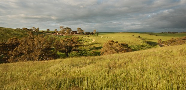 Barossa Valley: Food & Wine Heaven