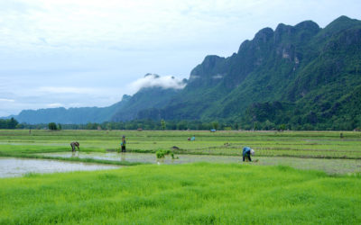 Peaks and Paddies, Southern Laos